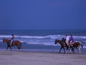 HorsesonOcracoke
