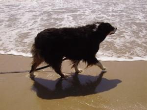 Spring OBX Beach Run 069