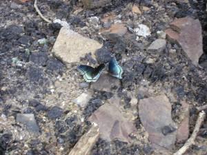 MAFWDA Rocky Gap Run 022