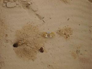 2010 Beach Run 006
