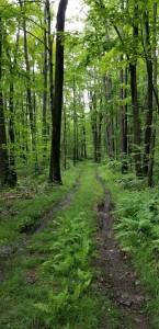 010 muddy trail on Turpin Tree Farm