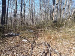 PB230118 looking W towards beginning of trail